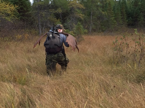Moose Hunting Newfoundland Victoria Outfitters